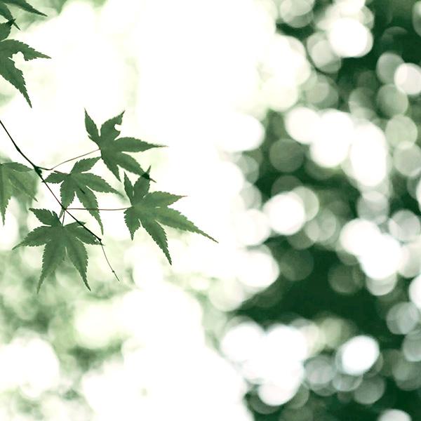 きれいな葉っぱの写真
