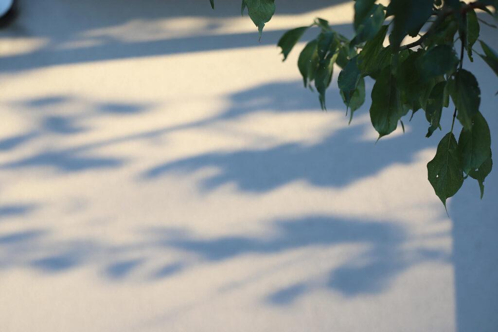 みゆ季の写真2